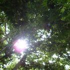 Hide sun