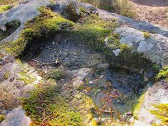 Hier après-midi, eau et lichen commencent à geler..