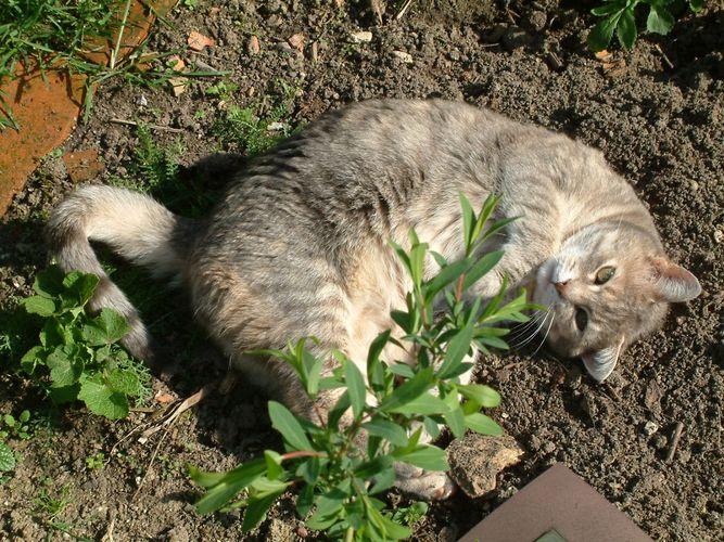 Hier bin ich Katze, hier darf ich's sein