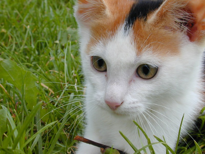 Hier die Katze ohne EBV