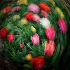 Hier dreht sich alles um Tulpen
