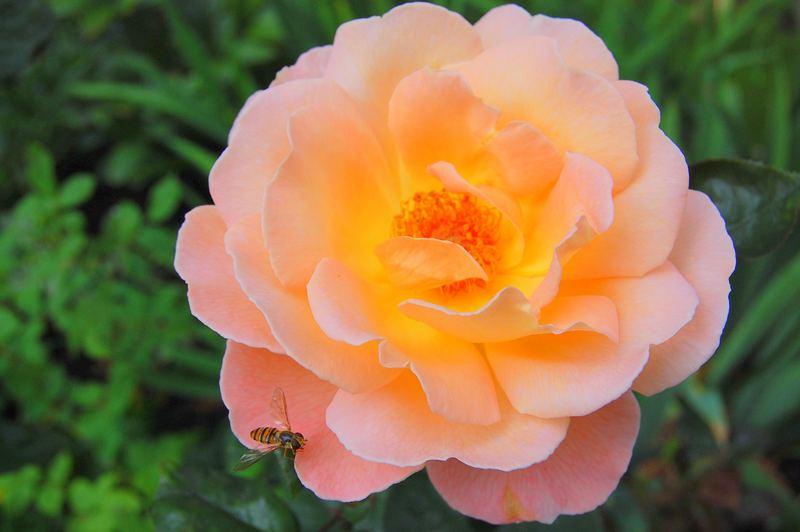 Hier eine Blüte für dich Cécile.