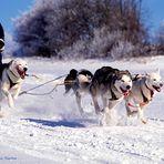 hier geht die Post ab ...  Schlittenhunderennen in Liebenscheid