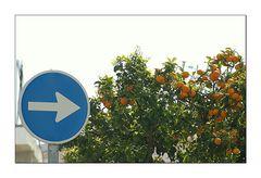 Hier gehts zur Citrus × aurantium L.