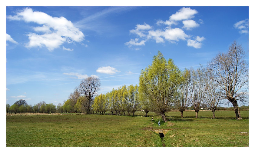 Hier ist der Frühling