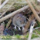 hier ist die Maus