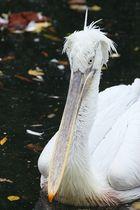Hier ist eine Vogelart mit dem Namen eines Schreibwarenherstellers...