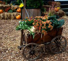 Hier kommt der Herbst gefahren