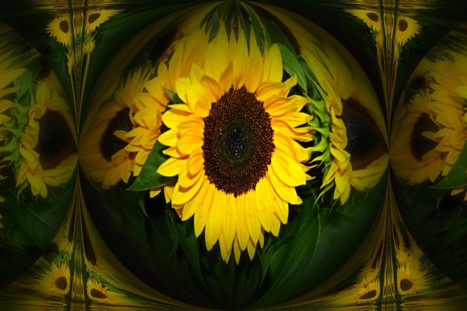 Hier mal ein paar Sonnenblumen