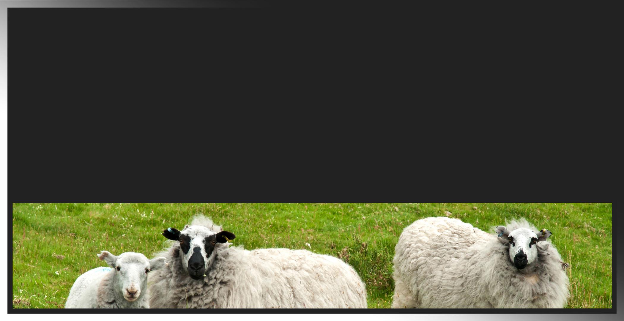 Hier schon mal die Schafe... Foto & Bild | weihnachten, spezial ...