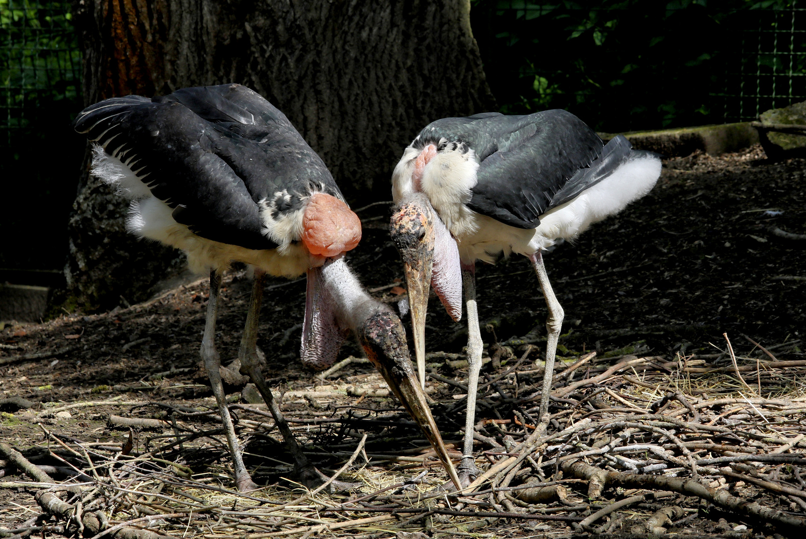 Hier wollen wir unser Nest bauen