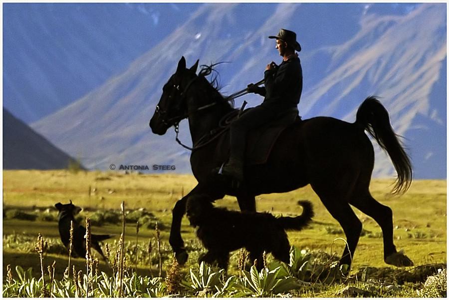 high country cowboy