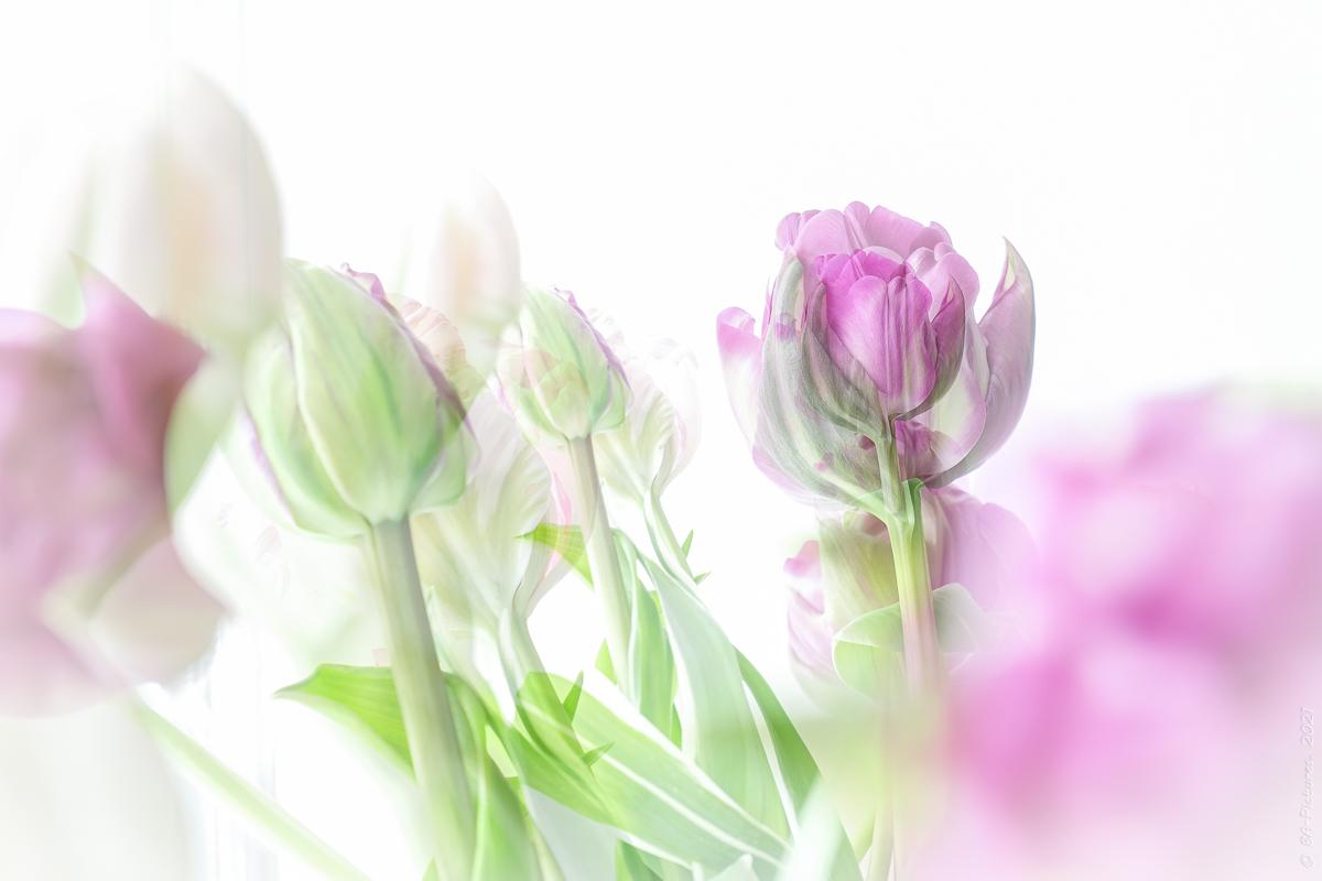 High-Key 'Blumen'