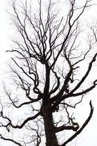 High Key Tree