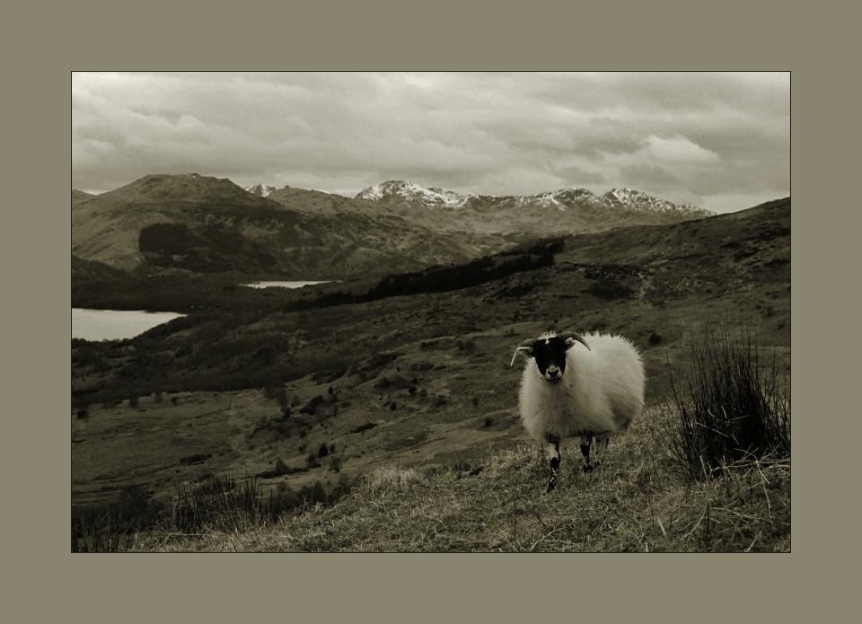 Highland Spirit #2