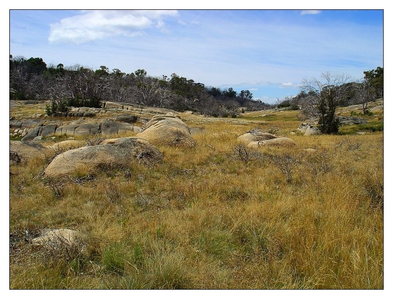 Highlights of Mt. Buffalo NP (IV)