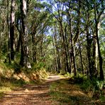 Hiking trail in hot summer