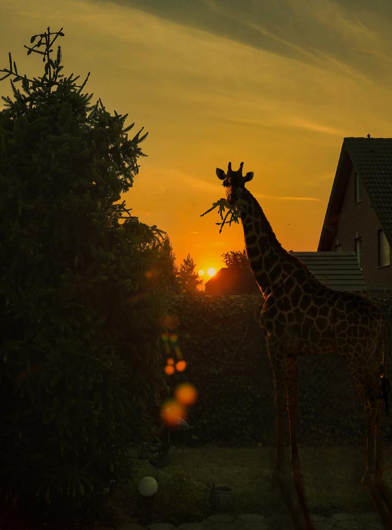 hilfe giraffe kam zurück, hat hunger gehabt ...