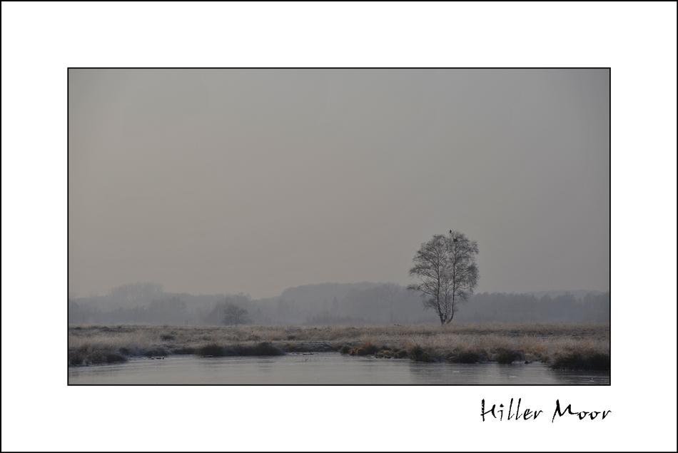Hiller Moor: Silvesterspaziergang #2