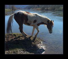 Hillybilly, The Crazy Horse... - oder: ...das tanzende Pferd...   ;-))