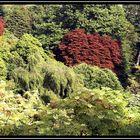 Himalayan Gardens at Muncaster Castle