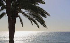 Himmel, Meer und Palme
