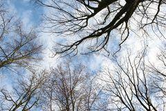 Himmel und Bäume