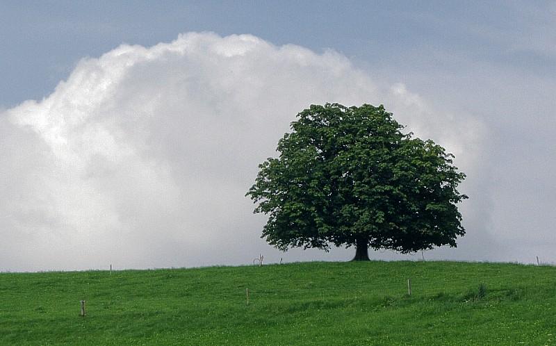 Himmel-Wolke-Baum-Wiese