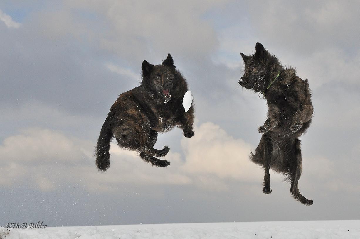 Himmelhunde