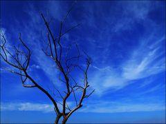 Himmelsbaum