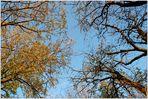 Himmelsblick im Herbst