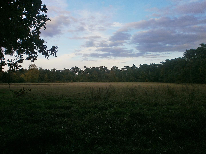 Himmel,Wald und Wiese