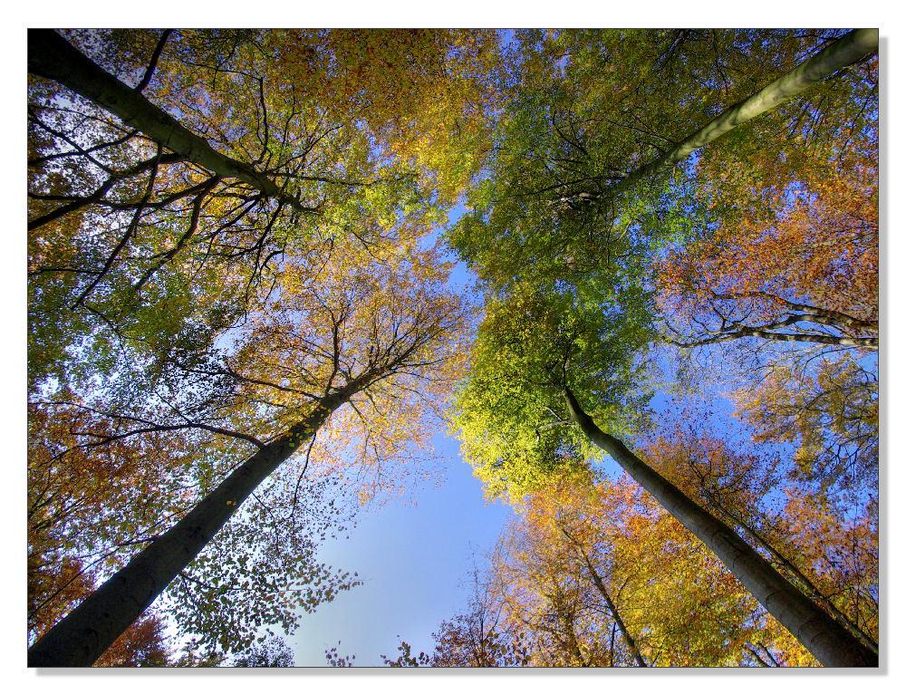 Himmlischer Herbstblick