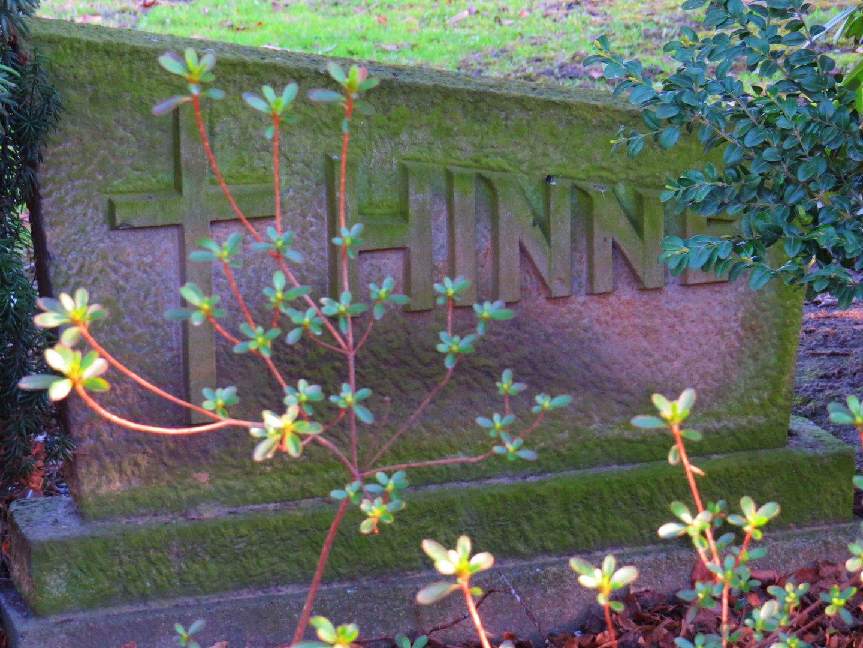"""Hinne"" welch ein Name,"