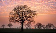 hinter Bäumen