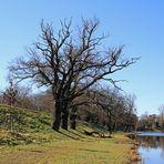 Hinter dem Wörlitzer Park