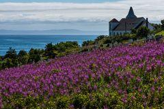 Hinter den Blumen steht eine Kirche                  DSC_3732