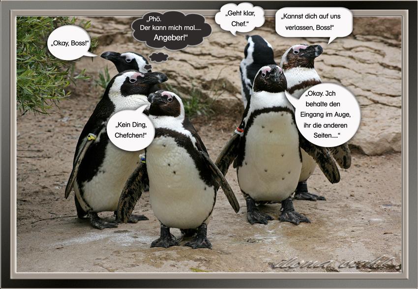 Hinter den (Zoo-)Kulissen