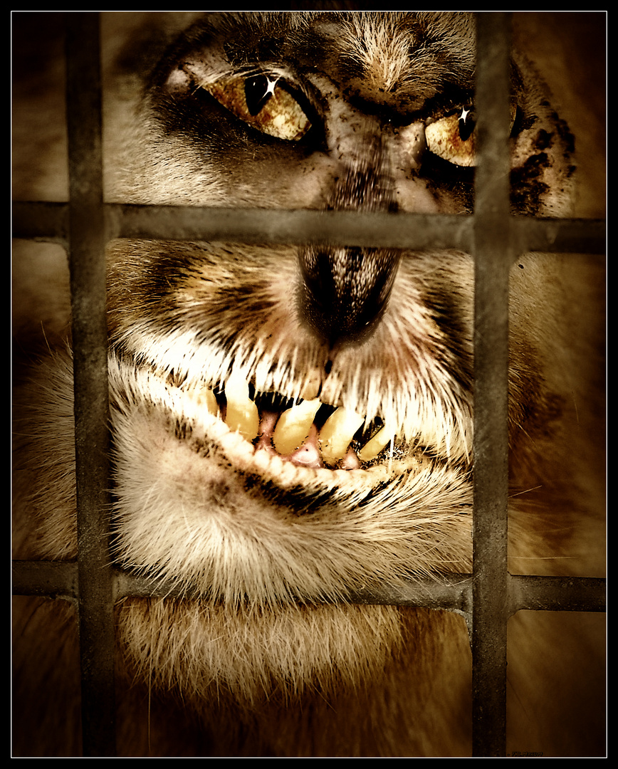 Hinter Gittern / / Behind Bars