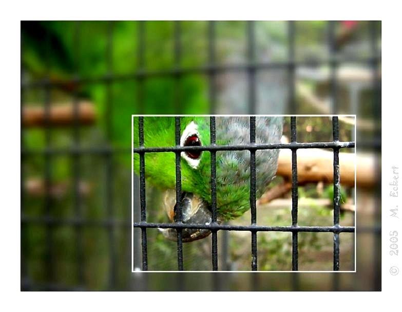 Hinter Gittern - Der Vogel Knast (reload)