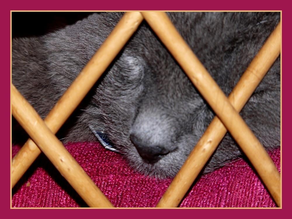 Hinter Gittern: Tom im Korbsessel