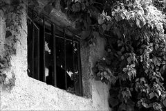 Hinterhof-Fenster