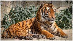 Hinterindischer oder Indochina-Tiger