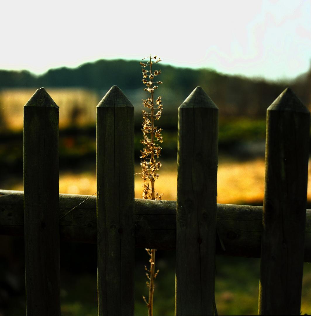hinter´m Gartenzaun...