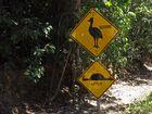 """Hinweisschild """"Kasuar crossing"""" ..."""