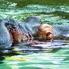 hipopotamo I