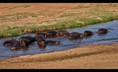 Hippo Marsch...