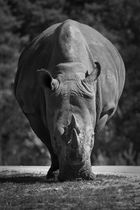 Hippo S/W