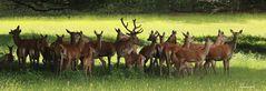 Hirschgruppe