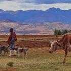 Hirte im Bergland Lesotho